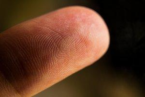 la yema del dedo
