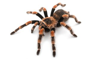 ¿Eres una araña?