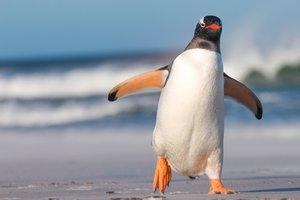 andar como un pato