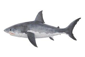 el gran tiburón blanco