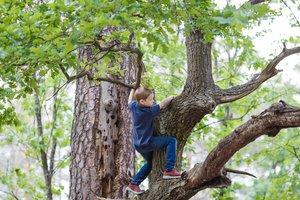 to climb trees