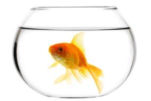 el pez de colores