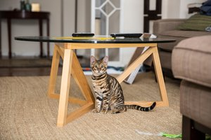the cat is under the table