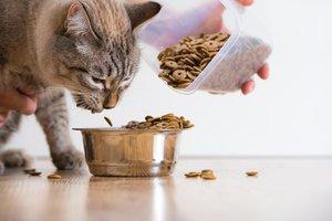 dar de comer al gato