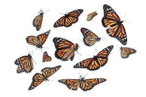 to flutter