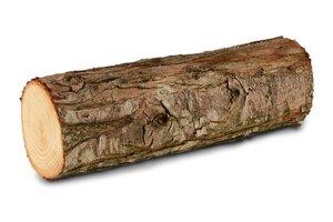el tronco