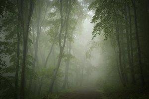 neblinoso