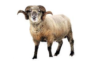 el carnero