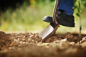 cavar
