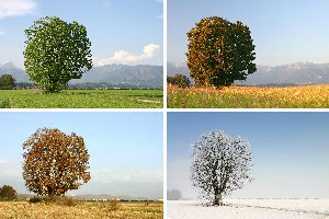 spring, summer, fall, and winter