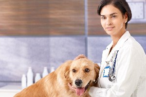 Veterinarian in Spanish | English to Spanish Translation - SpanishDict