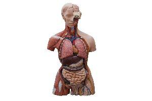 Medicina: El cuerpo