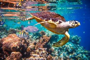 Animales marinos 1