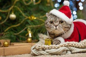 Ho Ho Hola - Holiday Words