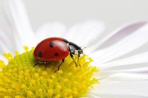 Insectos y arácnidos 2