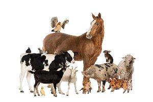 Verbos relacionados con los animales